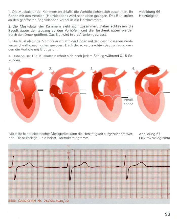 Blut Blutkreislauf